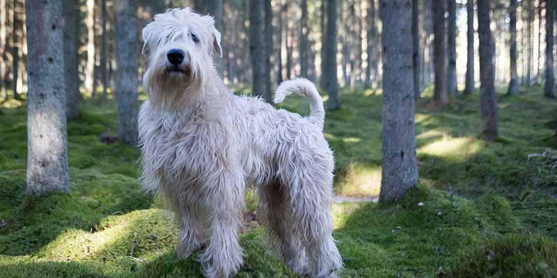 Perro con un tipo de pelo poco común en perros