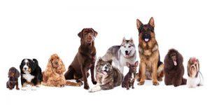 Varios perros, con diferentes tipos de pelaje