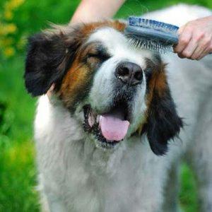 como cepillar un perro