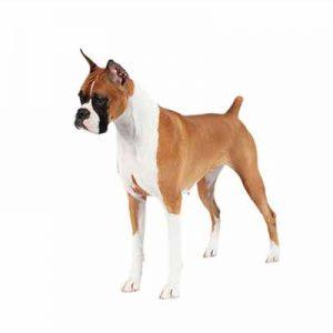 Tipos De Pelo En Perros Todo Lo Que Necesitas Saber