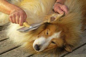 beneficios del cepillado de pelo de perros