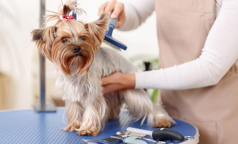 Como cepillar a un perro