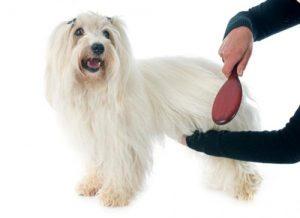 linda perra en sesion de cepillado de mascotas