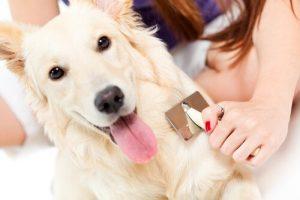 pasos para peinar y cepillar a tu perro