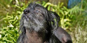 Perro sin pelo tomando el sol