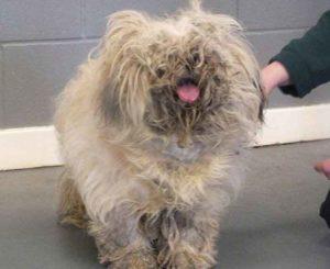 Como quitar los nudos del pelo de tu mascota