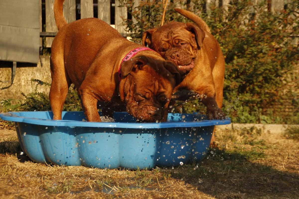 perros divirtiendose en el agua en su baño mensual