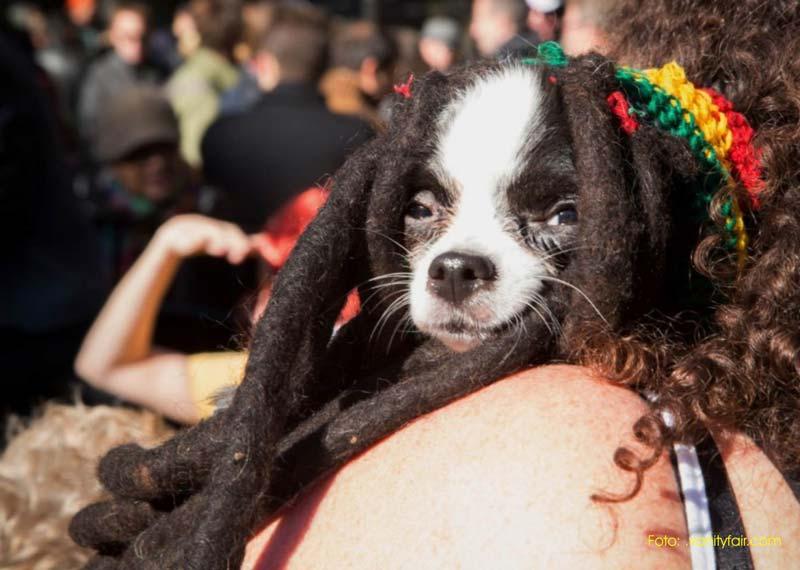 perro con rastas o dreadlooks