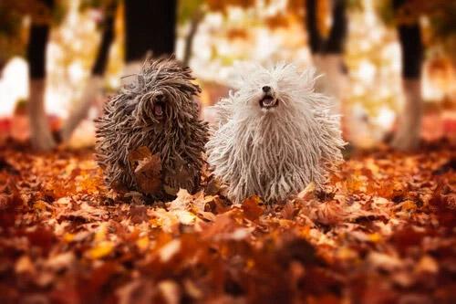 perros con dreadlooks