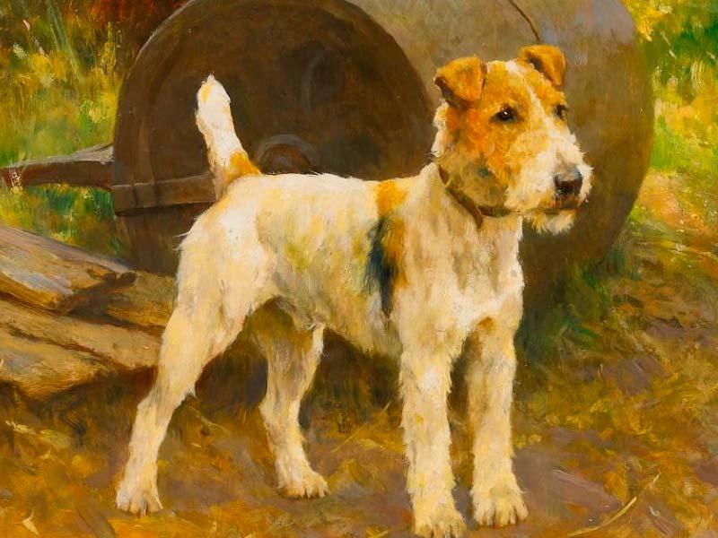 pintura de un fox terrier colores fuertes